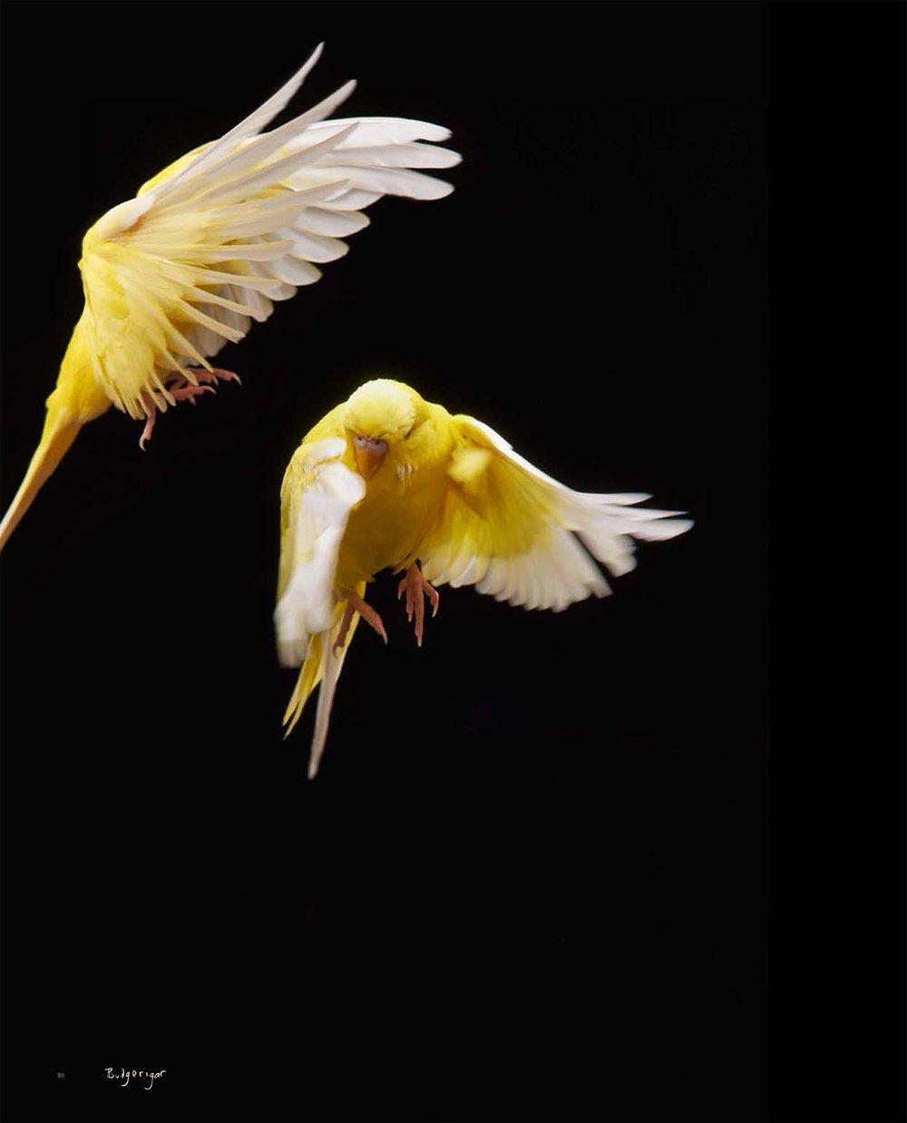 BIRD Gary Heery Book-completemmockup-82.jpg