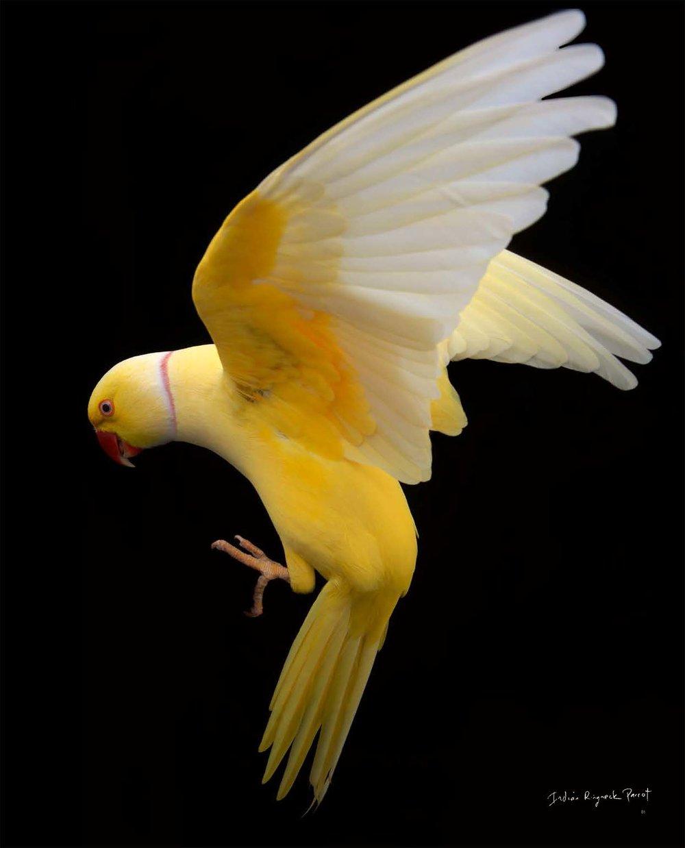 BIRD Gary Heery Book-completemmockup-83.jpg
