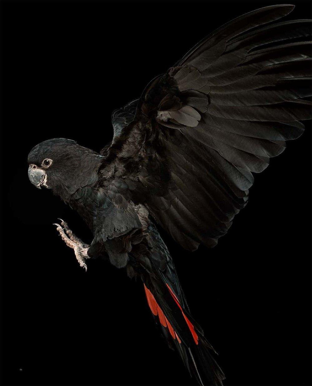 BIRD Gary Heery Book-completemmockup-86.jpg