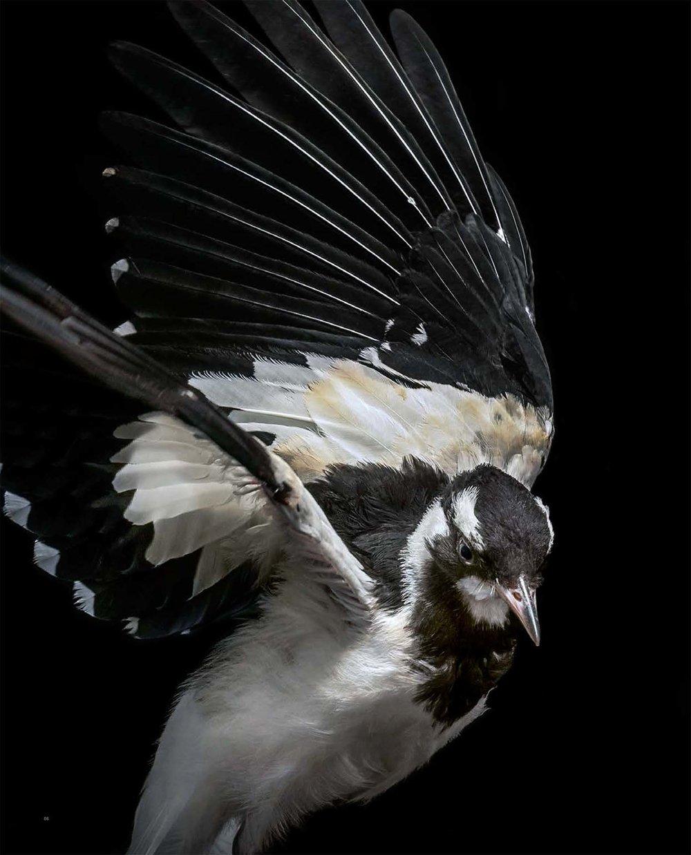 BIRD Gary Heery Book-completemmockup-88.jpg