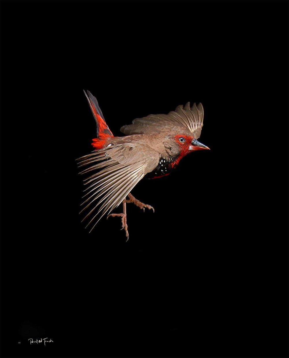 BIRD Gary Heery Book-completemmockup-90.jpg