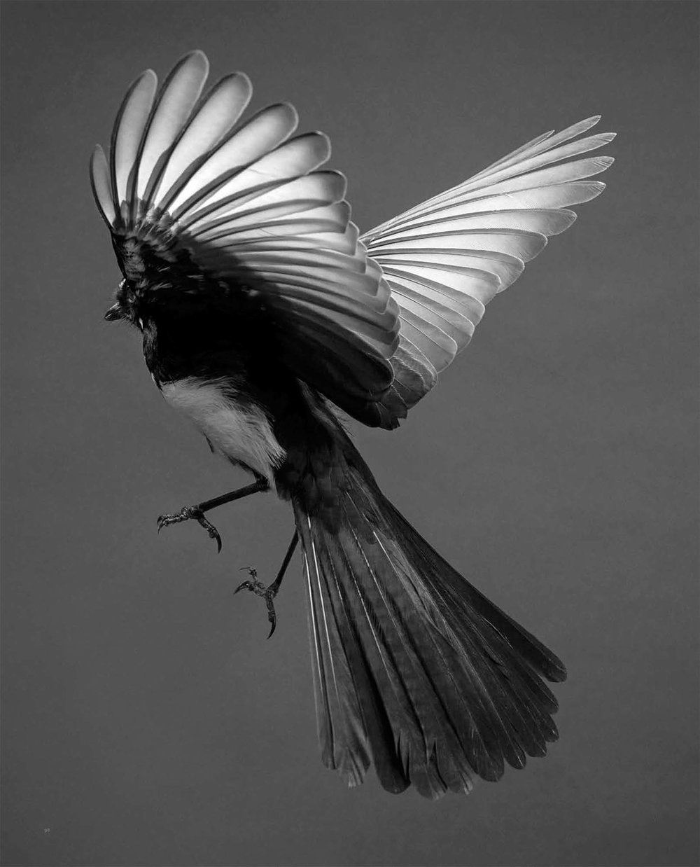 BIRD Gary Heery Book-completemmockup-100.jpg