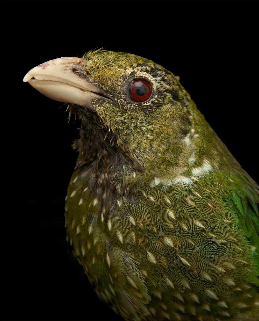 BIRD Gary Heery Book-completemmockup-109.jpg