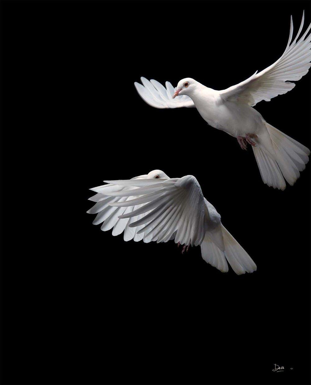 BIRD Gary Heery Book-completemmockup-123.jpg