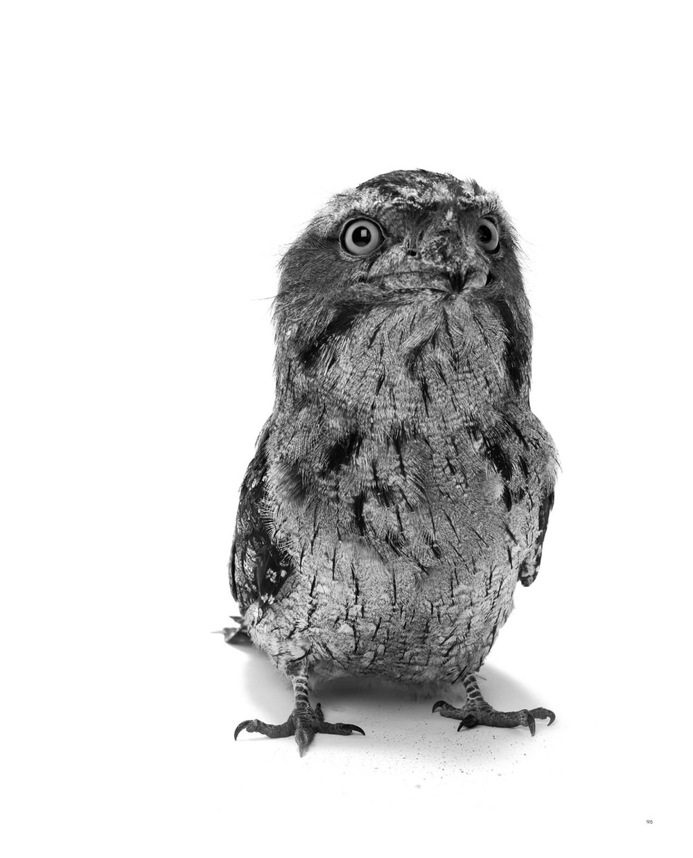 BIRD Gary Heery Book-completemmockup-127.jpg