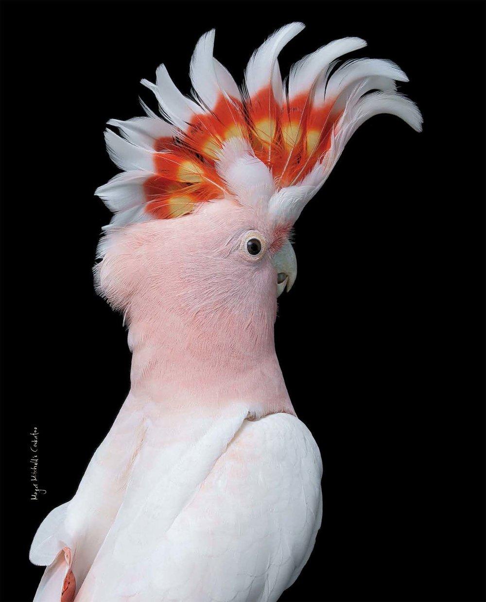 BIRD Gary Heery Book-completemmockup-132.jpg