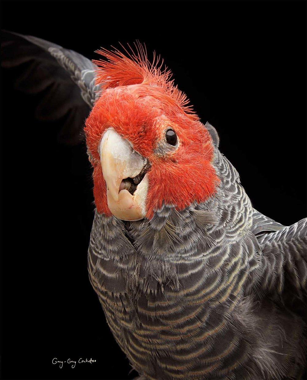 BIRD Gary Heery Book-completemmockup-139.jpg