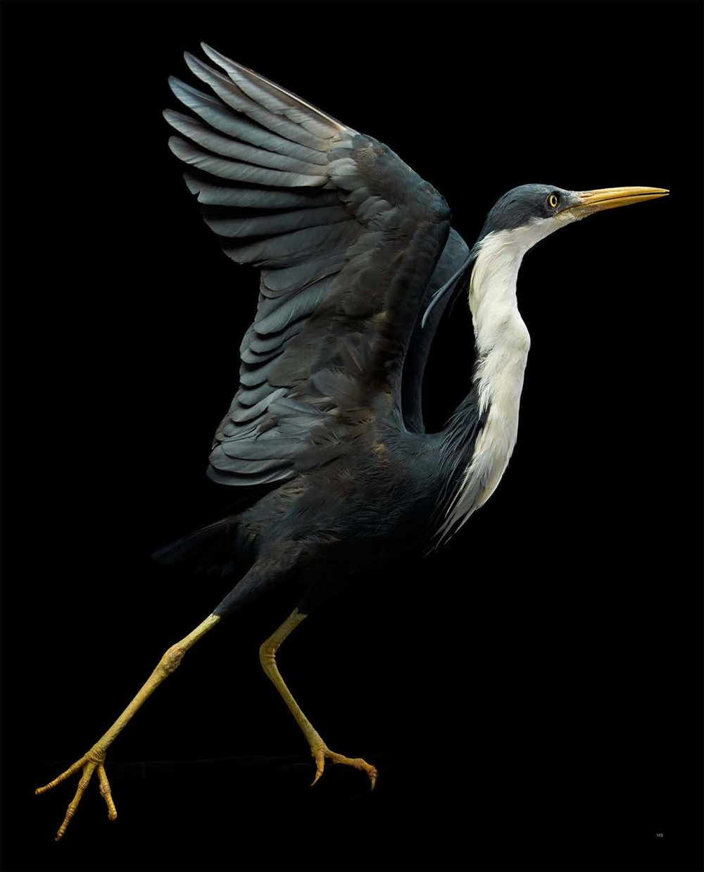 BIRD Gary Heery Book-completemmockup-151.jpg