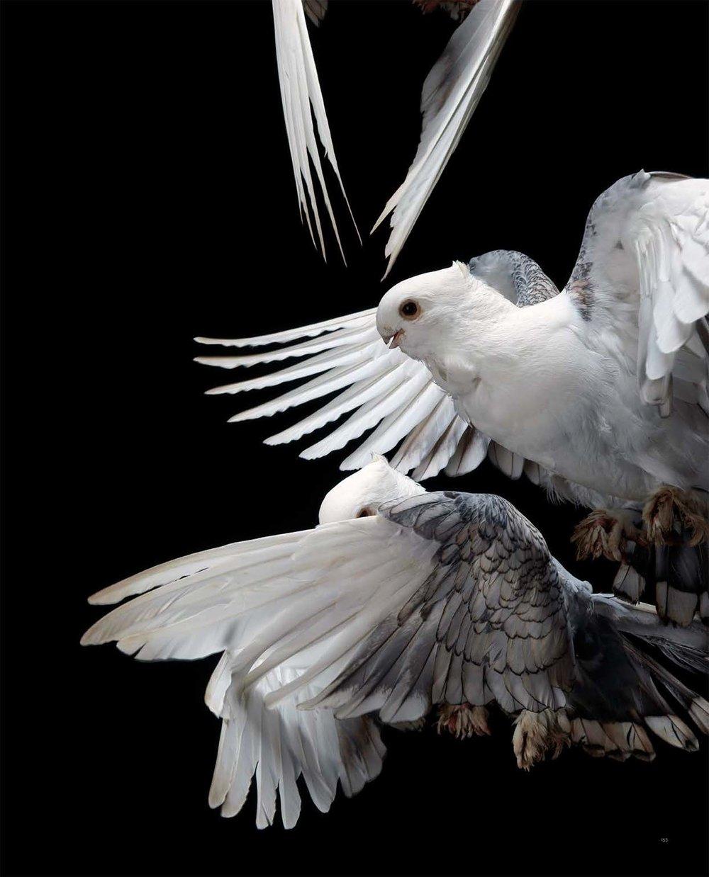 BIRD Gary Heery Book-completemmockup-155.jpg