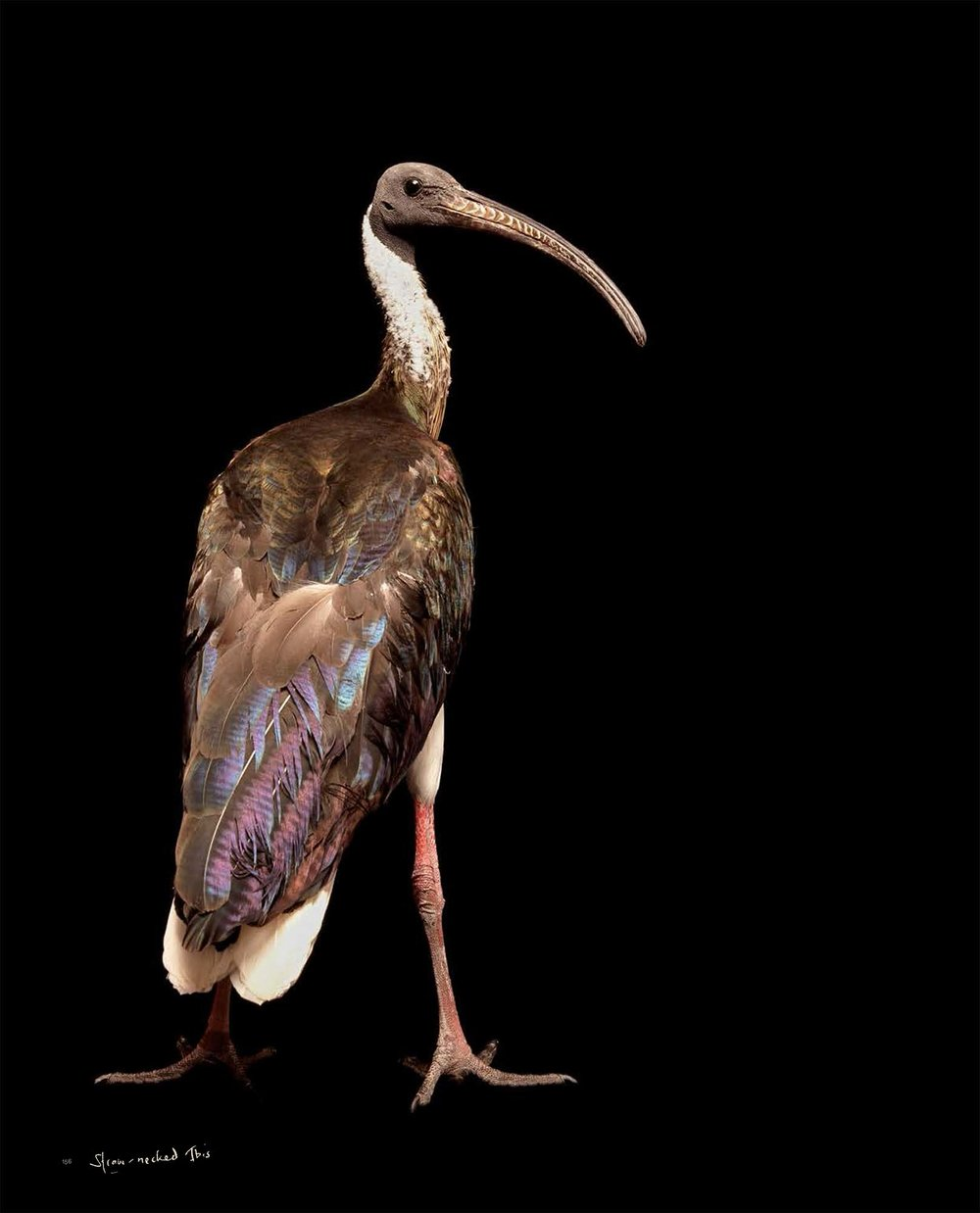 BIRD Gary Heery Book-completemmockup-158.jpg
