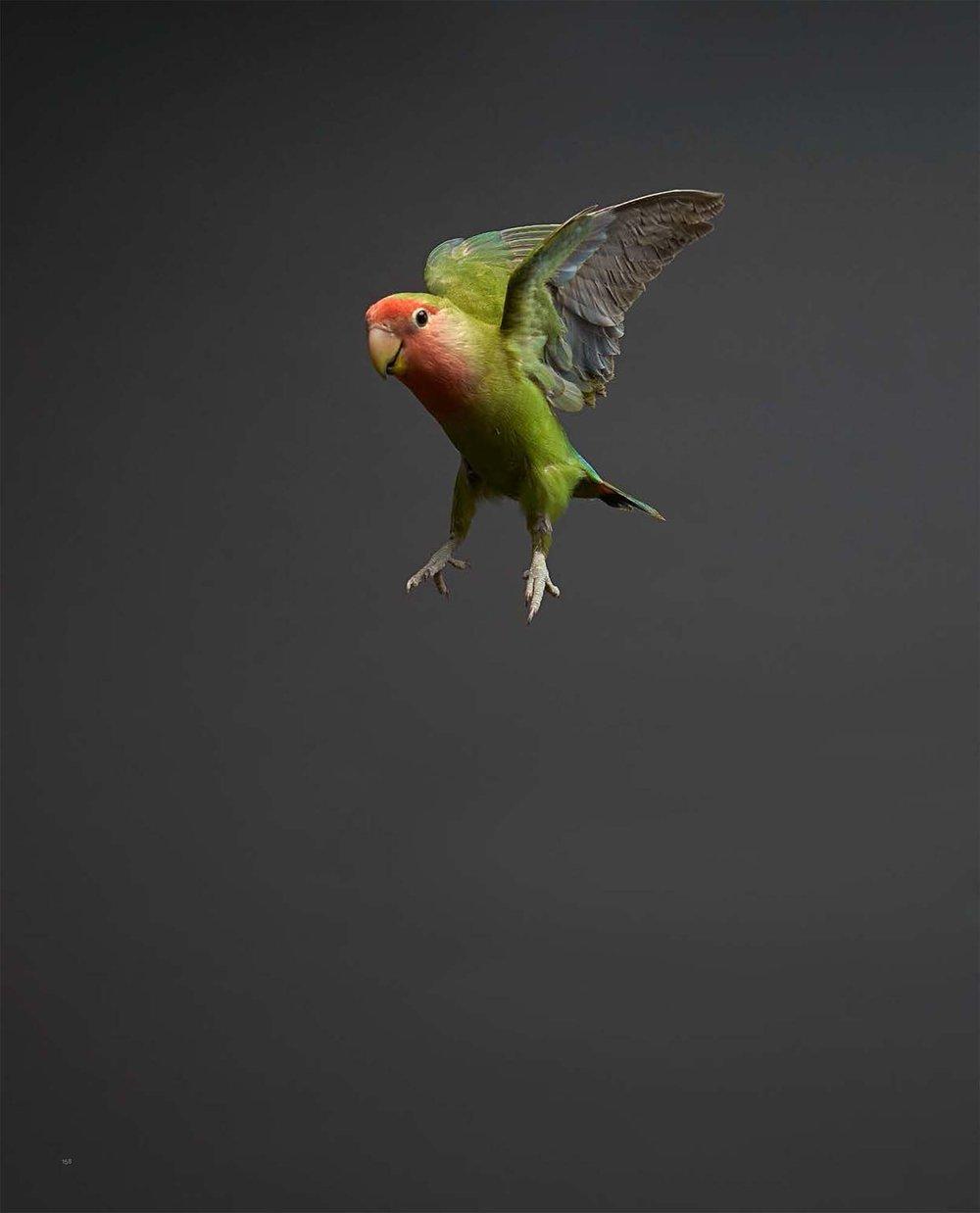 BIRD Gary Heery Book-completemmockup-160.jpg