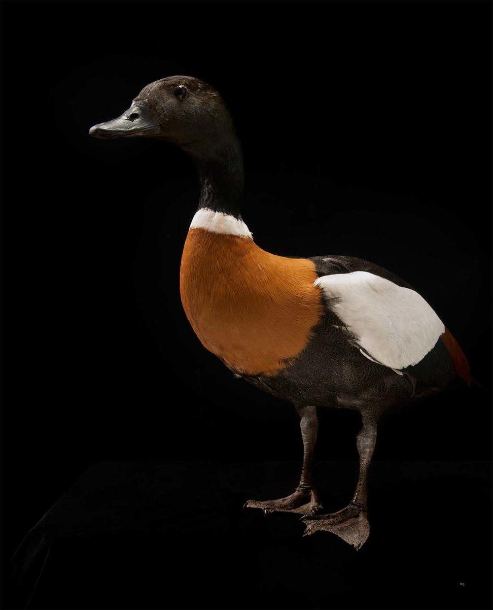 BIRD Gary Heery Book-completemmockup-165.jpg