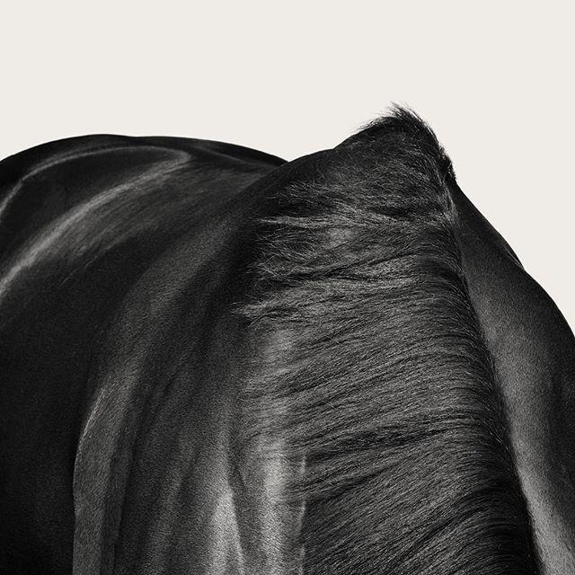 #VRC #horse #campaign #melbournecup