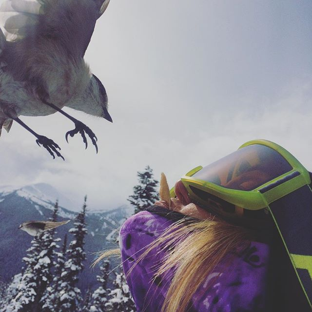 In coming.... @mal_is_stoked getting up close and personal with our little friend #whiskeyjack #whiskeywednesday #friends @whistlerblackcomb @nibz.bandanaz #protectyourselffrommothernature #beonewithnature #keepwarm