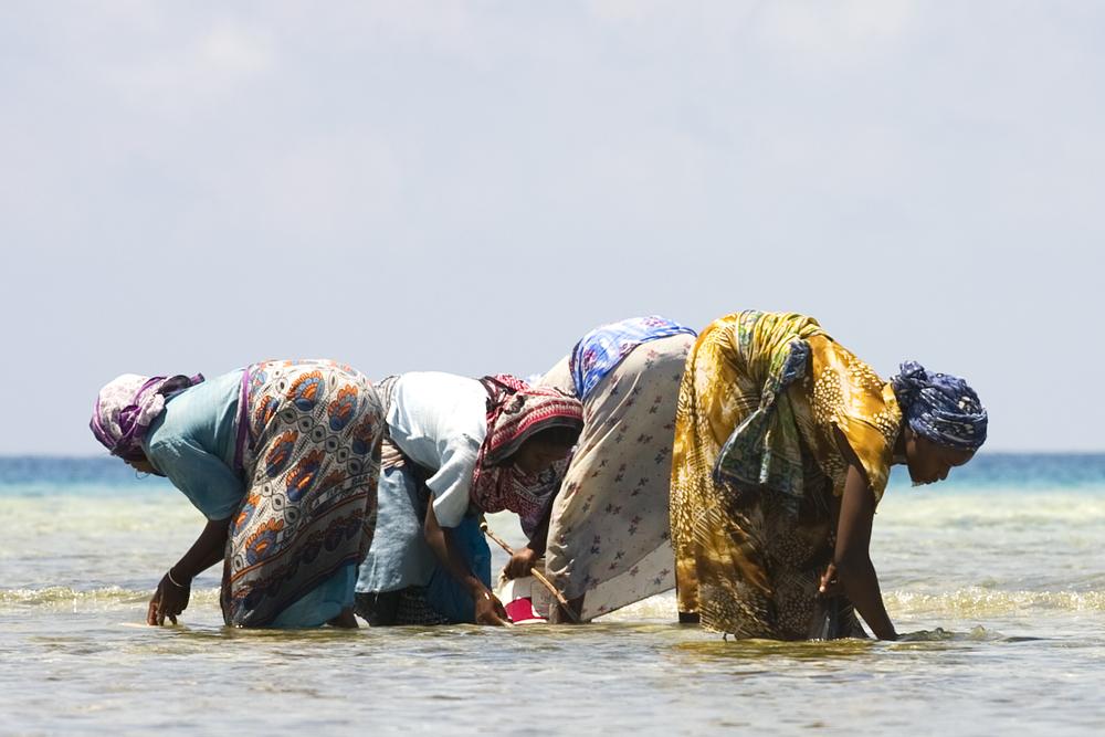 Fishing Women of Zanzibar.jpg