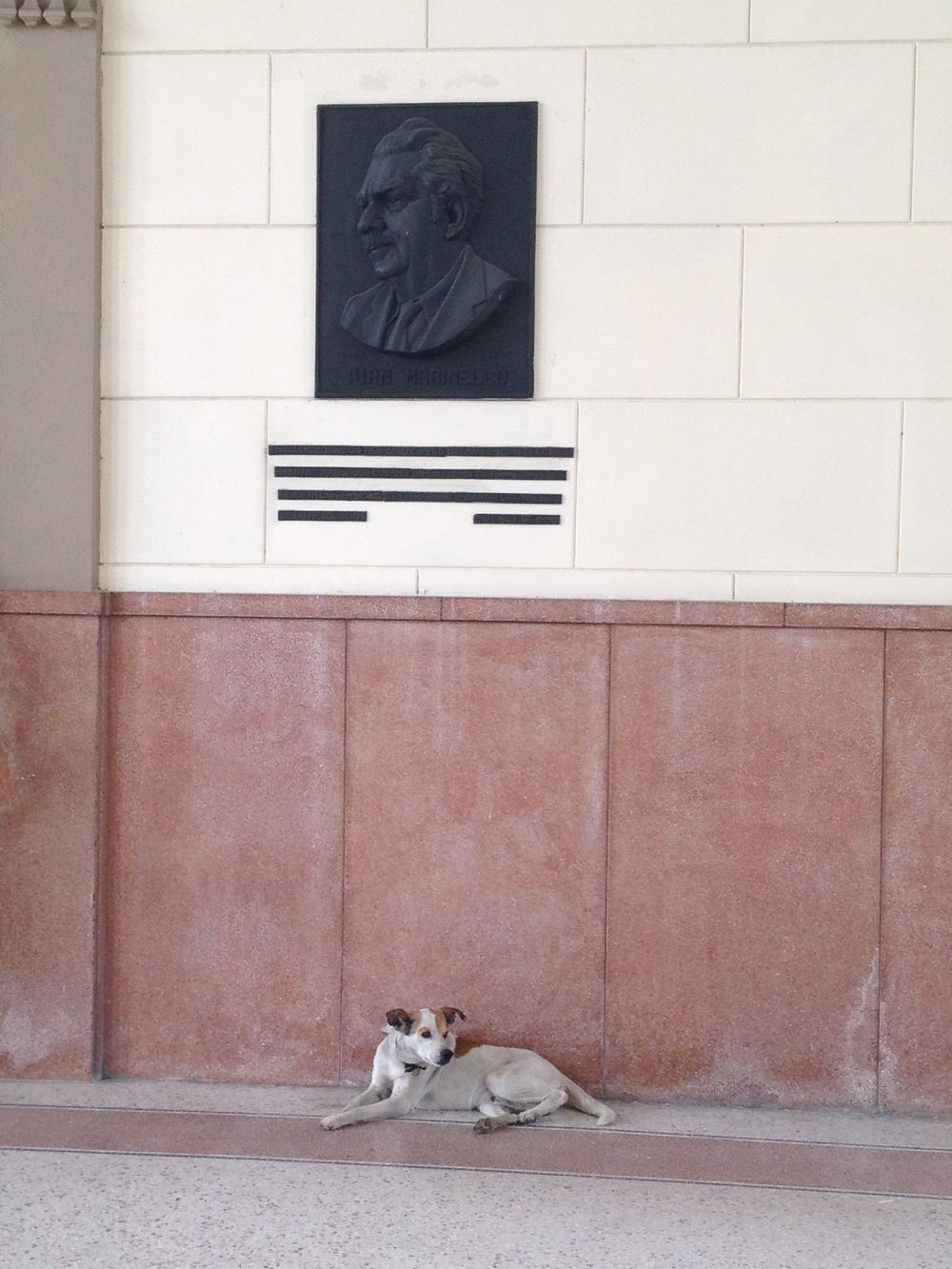 A dog at the University of Havana