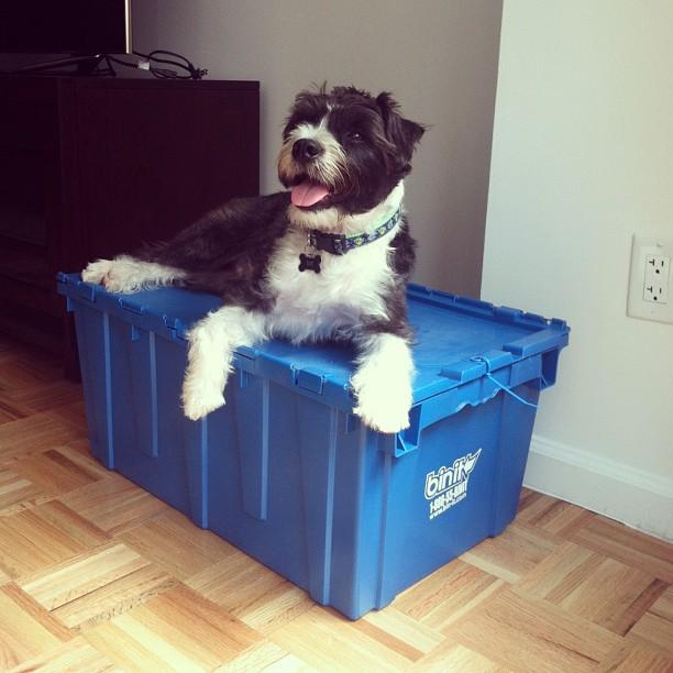 A cute pup keeping watch of @kdj112's bins!