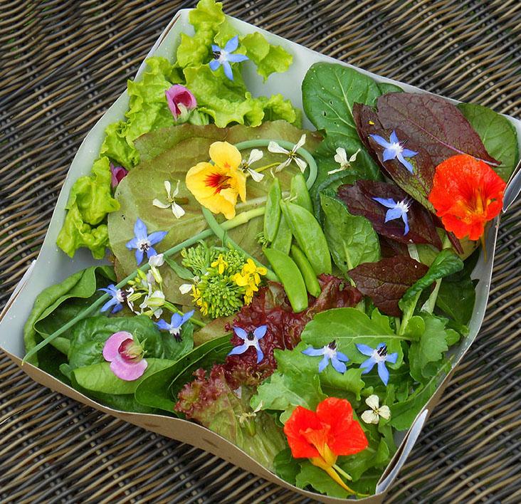 First_Salad_1673.jpg