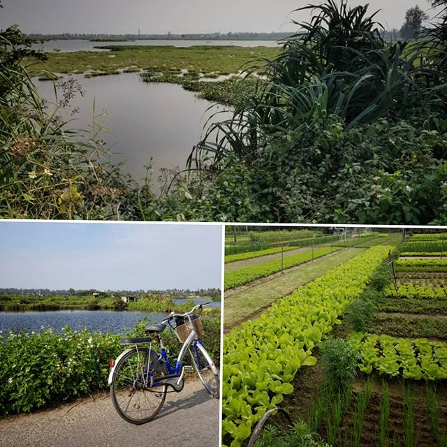 Forage, Fish, and Farm! Paradise at home in the winter...and just on the edge of the coming Tet Holiday (VN New Year) next week.