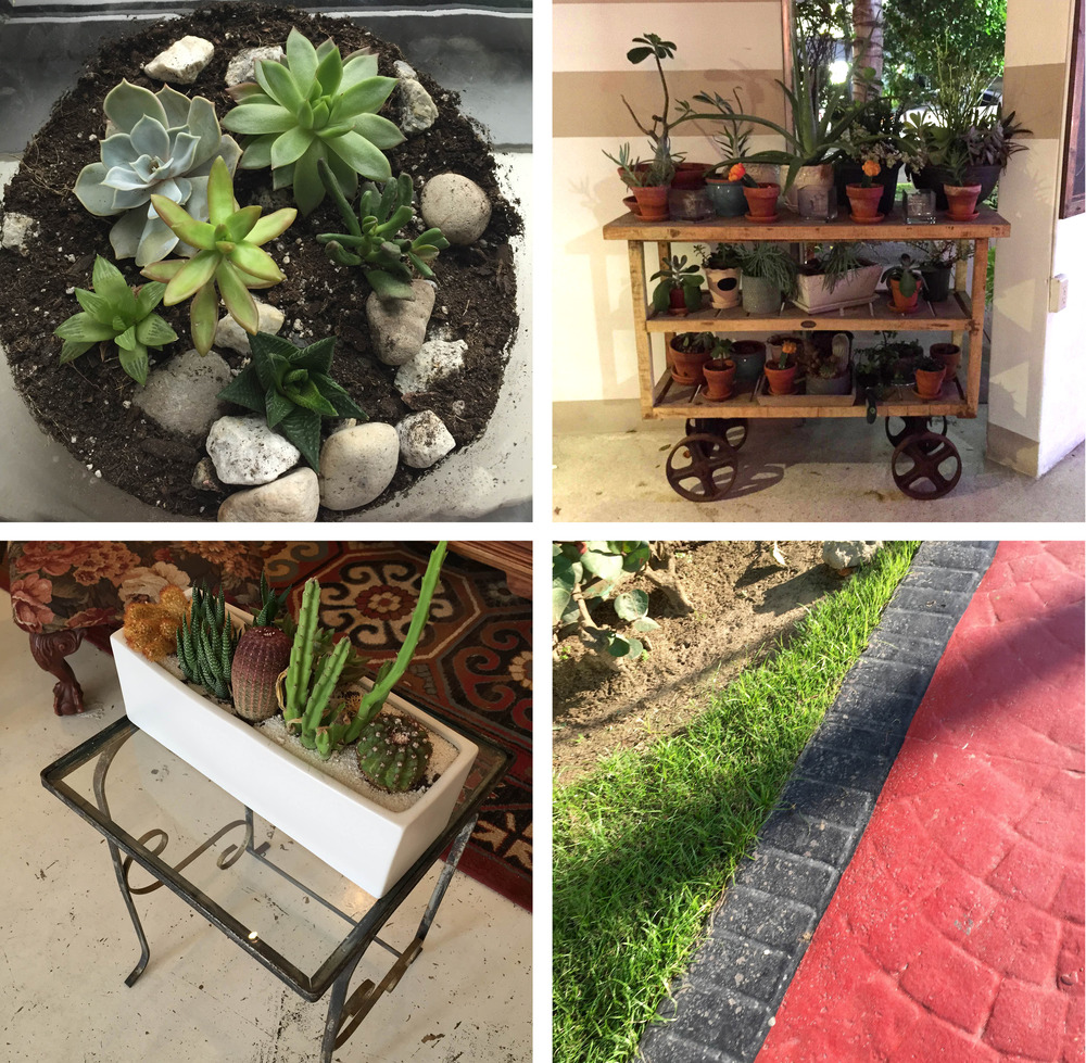 Large glass jar full of stones and succulents, via my baby sister; a cart of greens in Miami's Local House; cactus planter on a lovely side table; the walkway at the Dominican Republic resort we stayed in last month