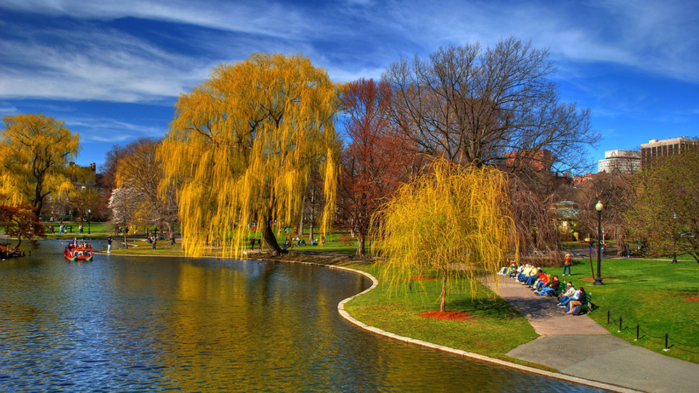 Take a stroll through the Boston Commons and witness the beauty of fall foliage happening right before your eyes!