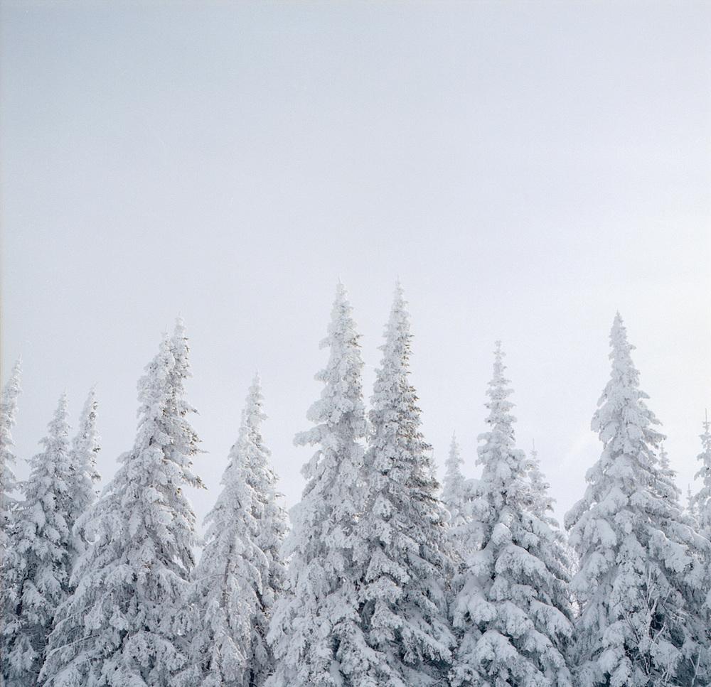 MassifTrees_1.jpg