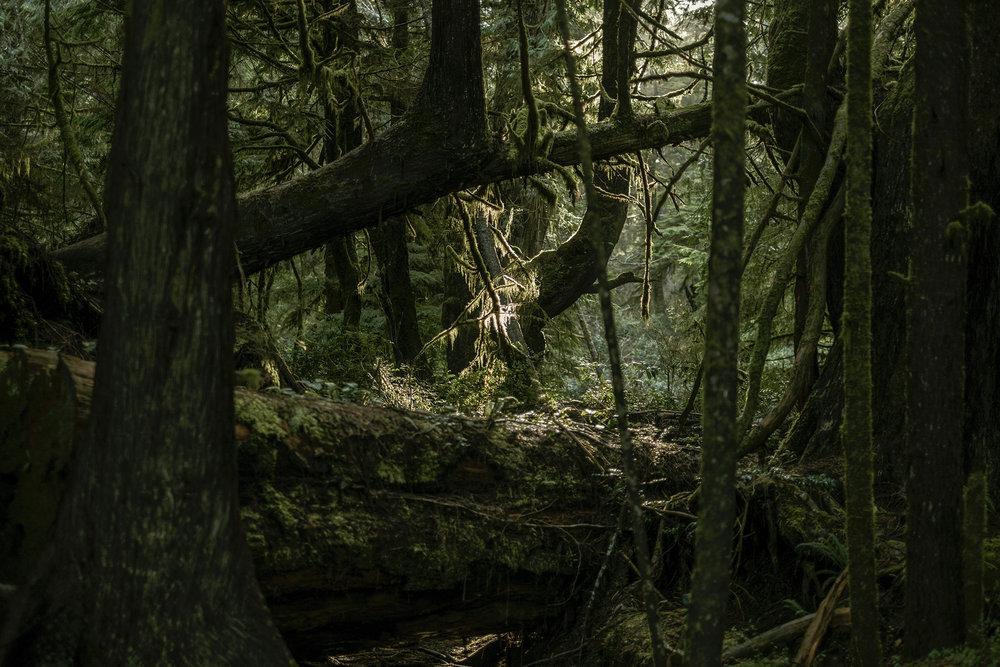Schooner Cove trail