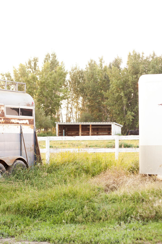 Horses_45.jpg
