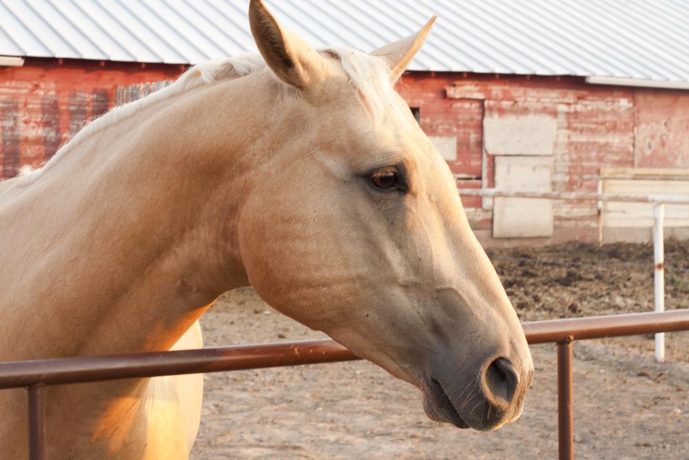 Horses_13.jpg