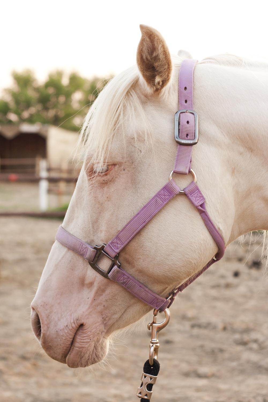 Horses_58.jpg