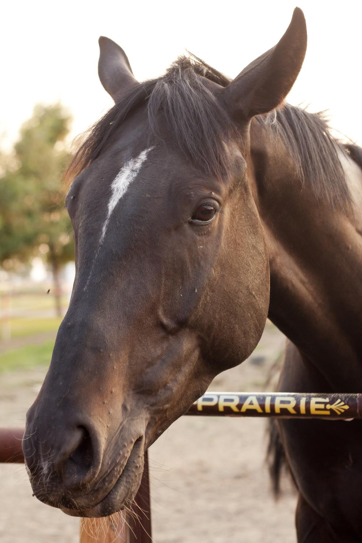 Horses_50.jpg