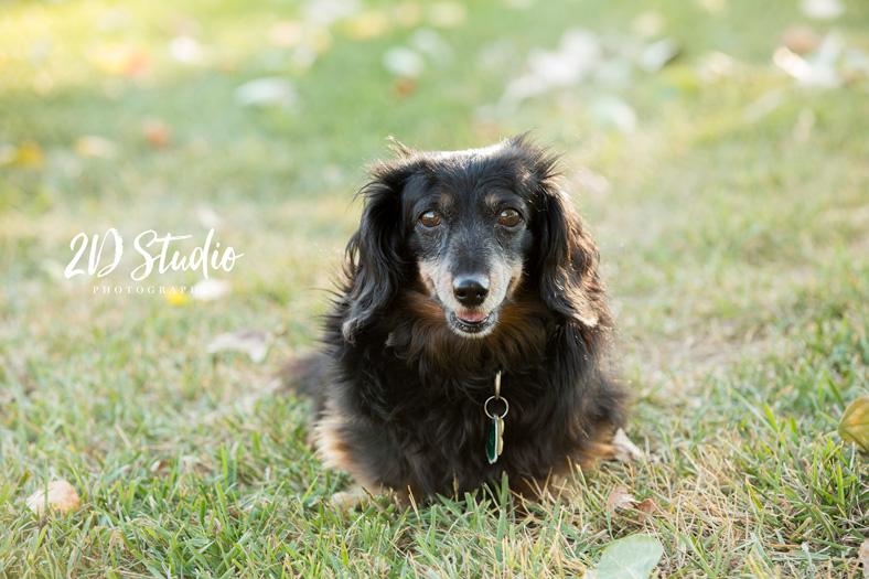 Lethbridge Pet Photography