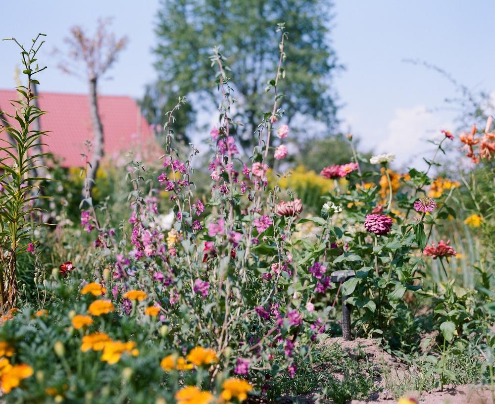 スロベニアの7月、庭の花々はわずかながら萎れ始めていた。短い夏の終わり。