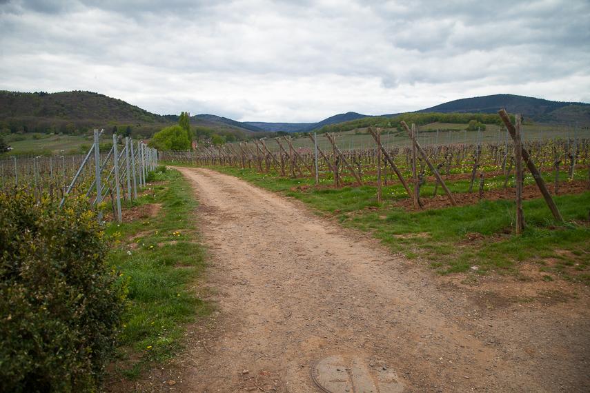 Pyöräreitti halkoo usein viinitiloja, vuorijonon juurella ylivoimaisia nousuja ei tule eteen.