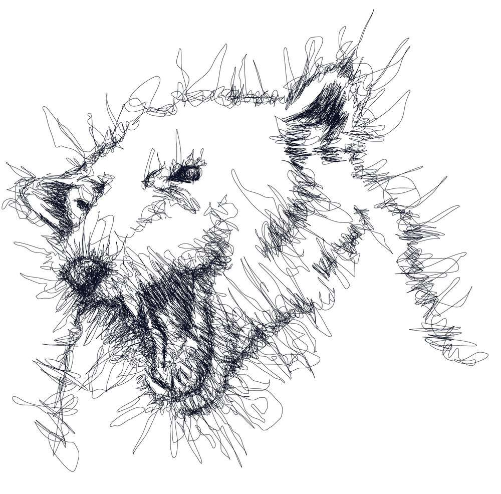 Polar-bear_2.jpg