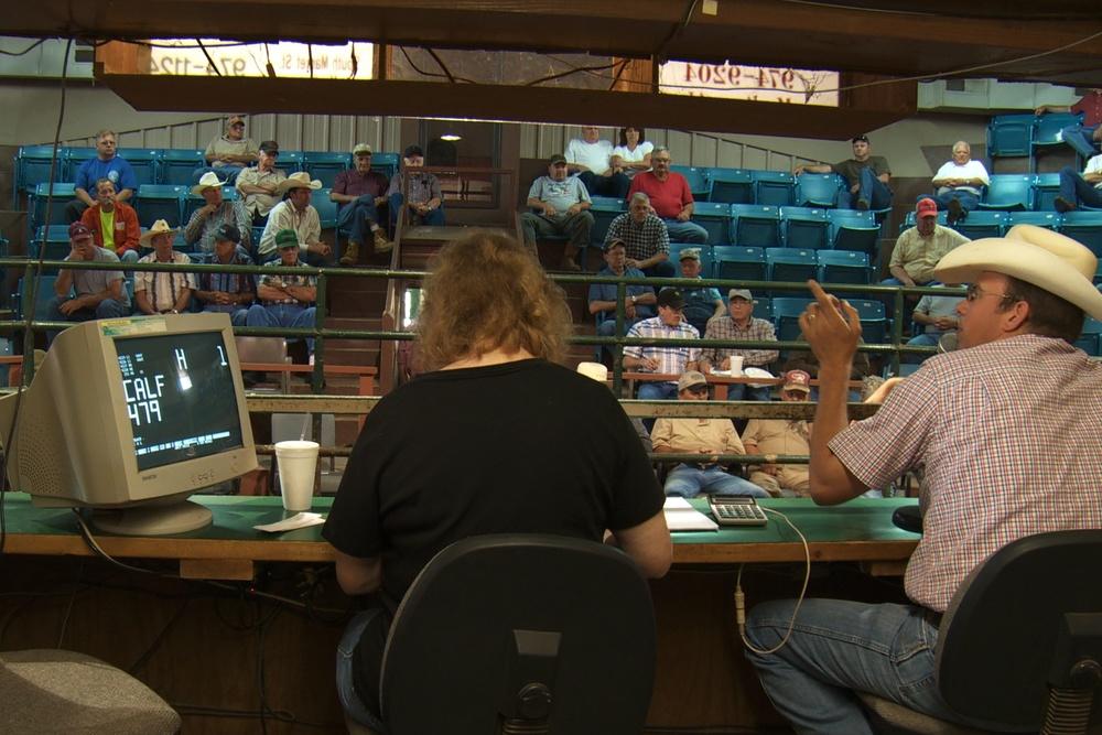cattle auction.jpeg