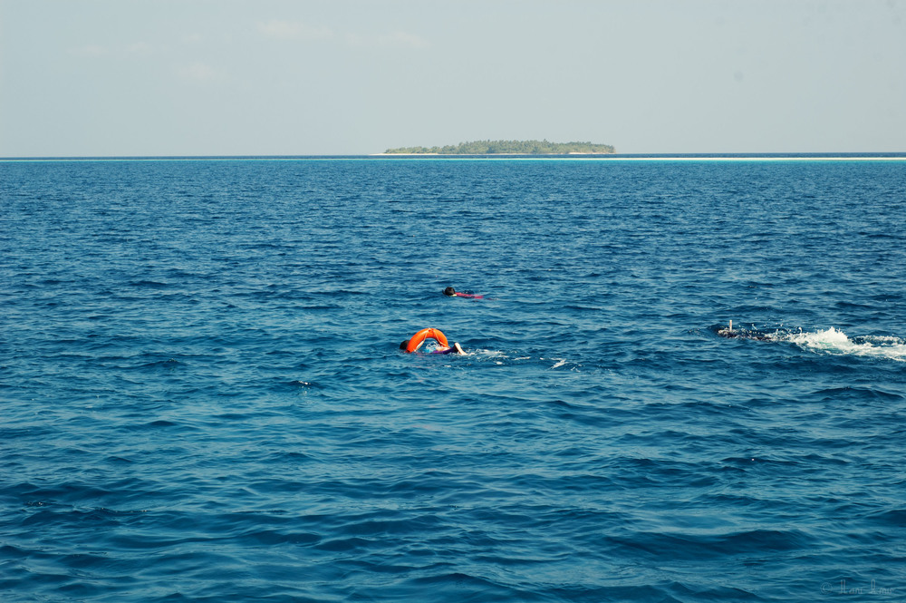 The men make a team and spread out to search a wider area for bait fish