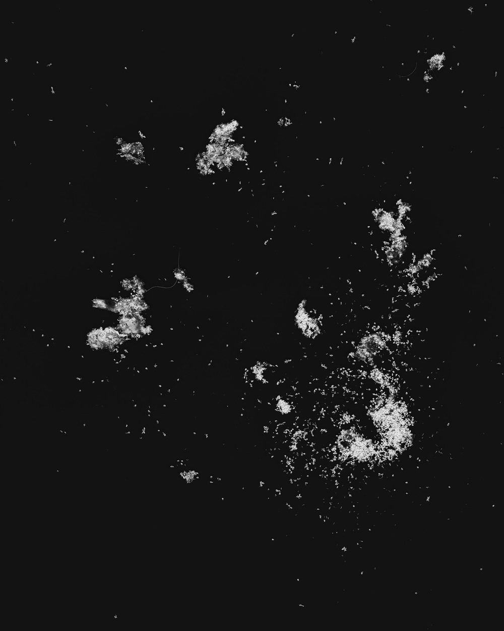 Islands in the Sun Ants scanned with digital flatbed scanner (2014)