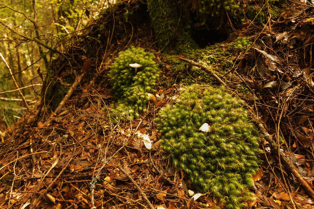 Twin Fungi copy.jpg