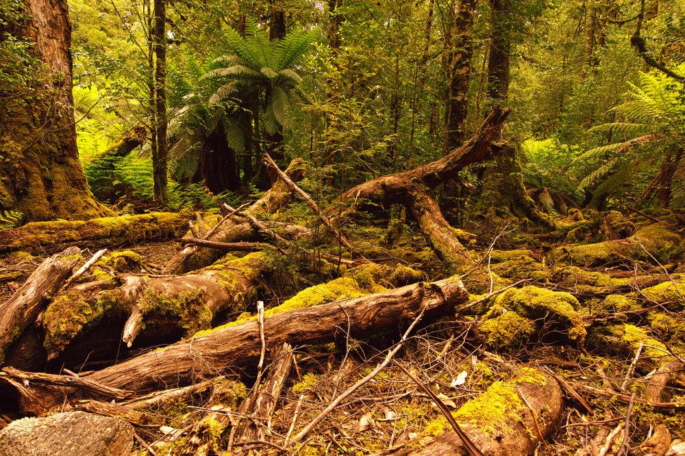 Moss logs copy.jpg