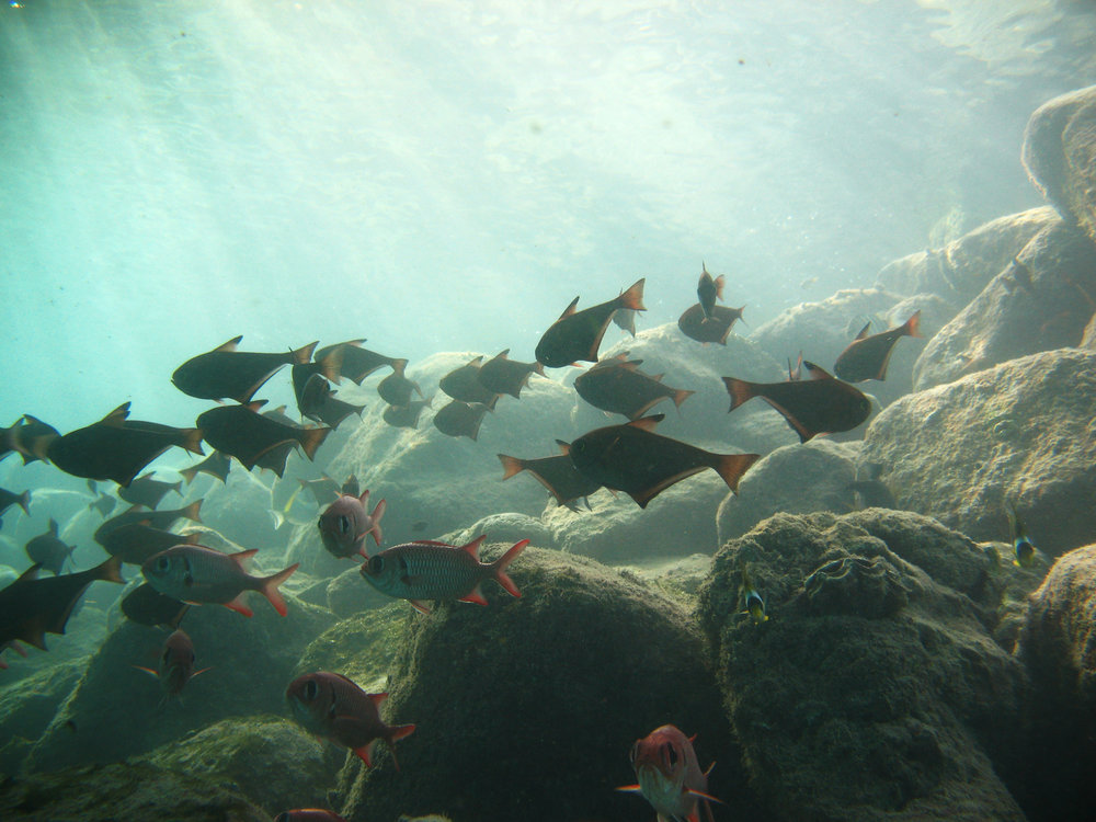 Shoals of fish gathering near the rocks on the island facing side.