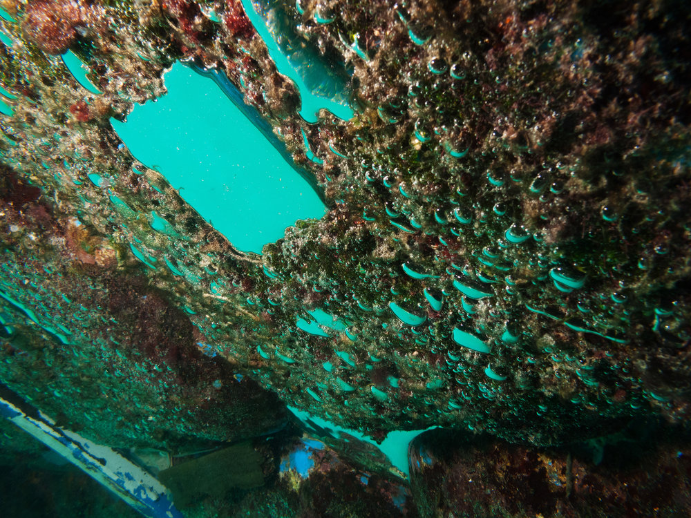 The underside of the plastic buoys that make up the current platform is completely covered in moss and other organisms.