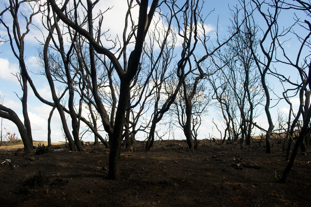 2013-02-28 - Tasmania - Dunalley after the fires - D3100  - DSC_0118.jpg