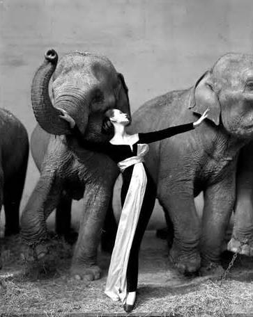 Dovima with Elephants by Avedon