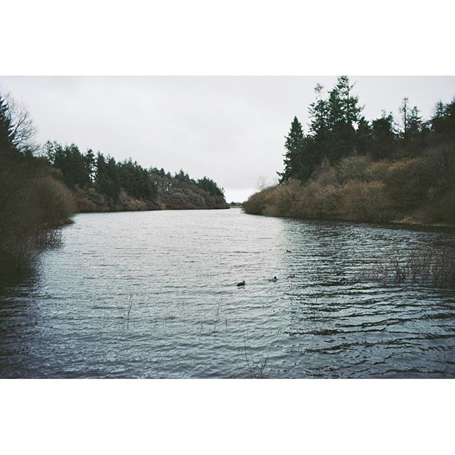 Peace and quiet and grey. Dartmoor. #landscape #serene #ducks #outandabout #outdoors #kodak #35mm #analogue #filmisnotdead #wandering #wondering #trees
