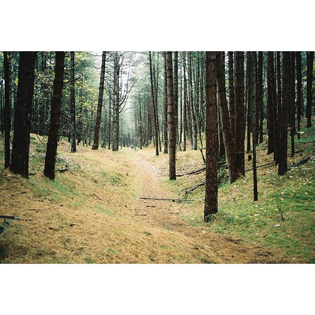 Wooded wanderings. Part 1. Norfolk 2017. #landscape #35mm #filmphotography #filmisnotdead #kodak #wildernessculture #stayandwander #natgeoadventure #natgeo #welivetoexplore #adventure #modernoutdoors #livelevel #sustainable #nature #renewable #woods #forest #norfolk