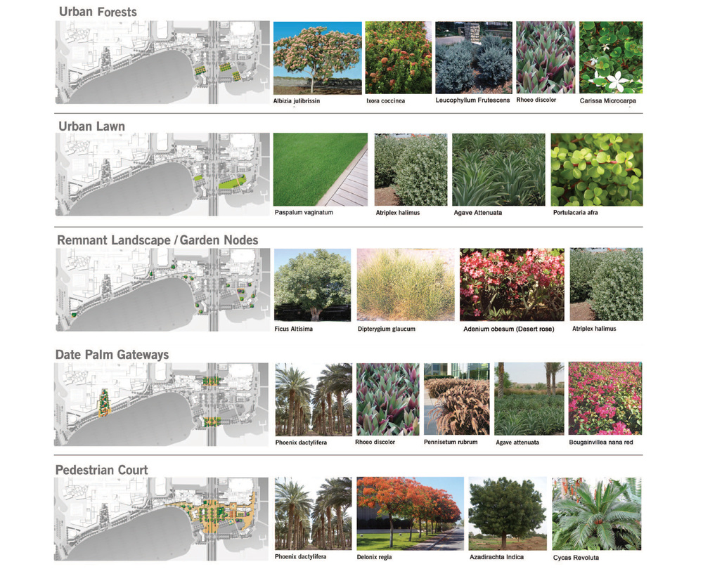 Al Bateen_Planting-01.jpg