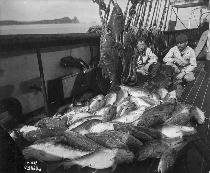 cod and halibut.jpg
