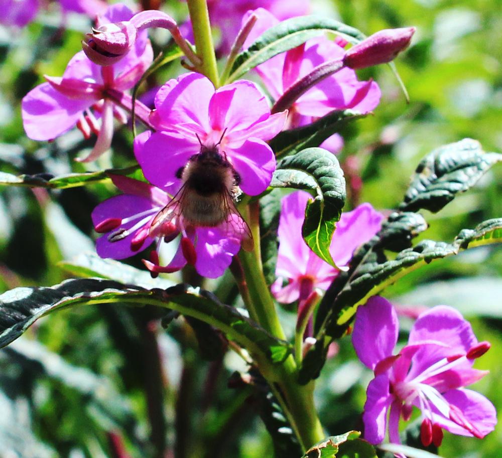 #3 - Purple Pollination