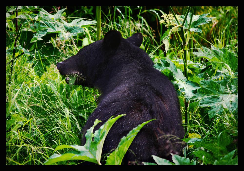 #4 - Bearcub Snacktime